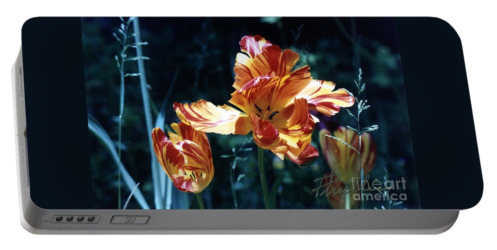 Gorgeous Portable Battery Charger featuring the photograph Gorgeous Tulip by Phyllis Kaltenbach