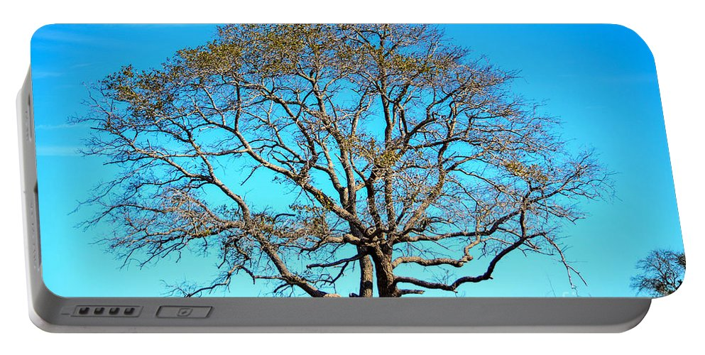 Tree Portable Battery Charger featuring the photograph Beautiful Branching by Debra Martz