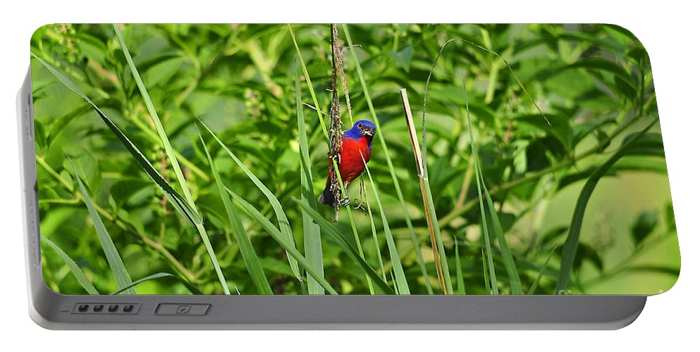 Bird Portable Battery Charger featuring the photograph Beautiful Bunting by Al Powell Photography USA