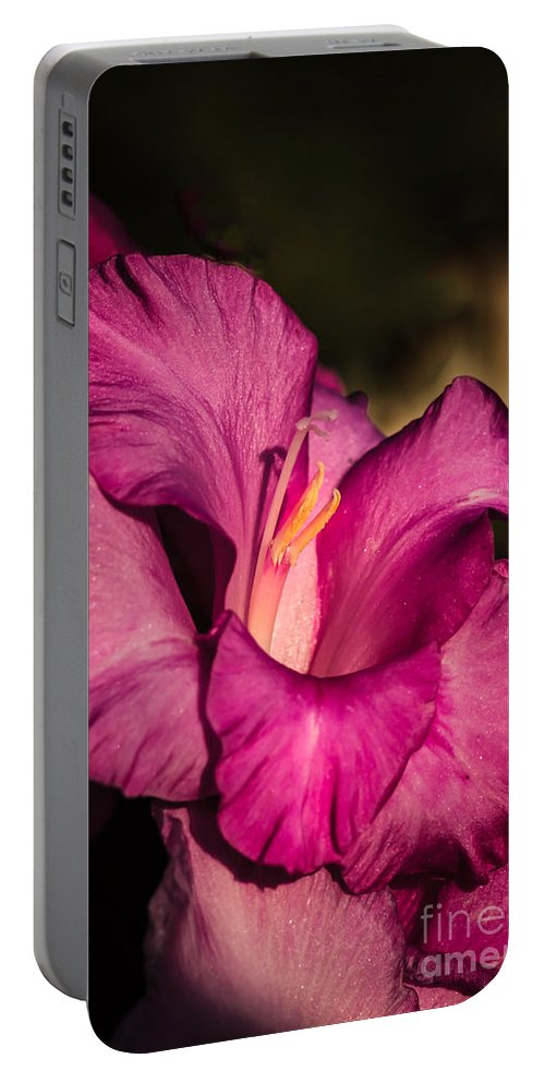 Flower Portable Battery Charger featuring the photograph Beautiful Gladiolus by Robert Bales