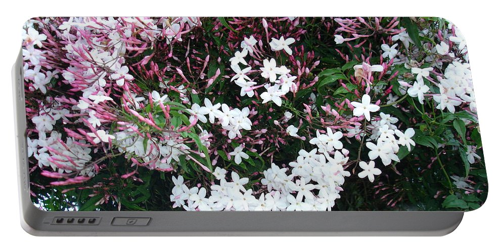 White Portable Battery Charger featuring the photograph Beautiful Jasmine Flowers In Full Bloom by Taiche Acrylic Art