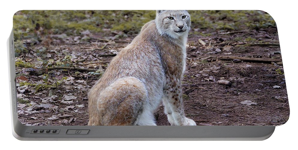 Photo Portable Battery Charger featuring the photograph Beautiful Lynx by Jutta Maria Pusl