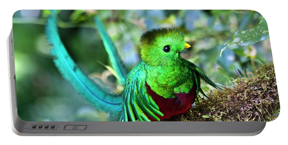 Bird Portable Battery Charger featuring the photograph Beautiful Quetzal 5 by Heiko Koehrer-Wagner