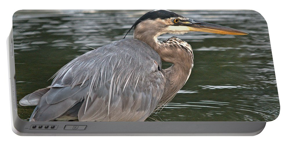 Portable Battery Charger featuring the photograph Beautiful Wader by Cheryl Baxter