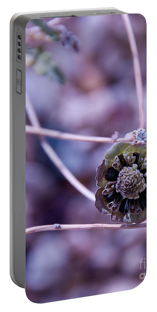 Beauty After Bloom Is A Desert Dry Flower Portable Battery Charger featuring the photograph Beauty After Bloom by Mae Wertz