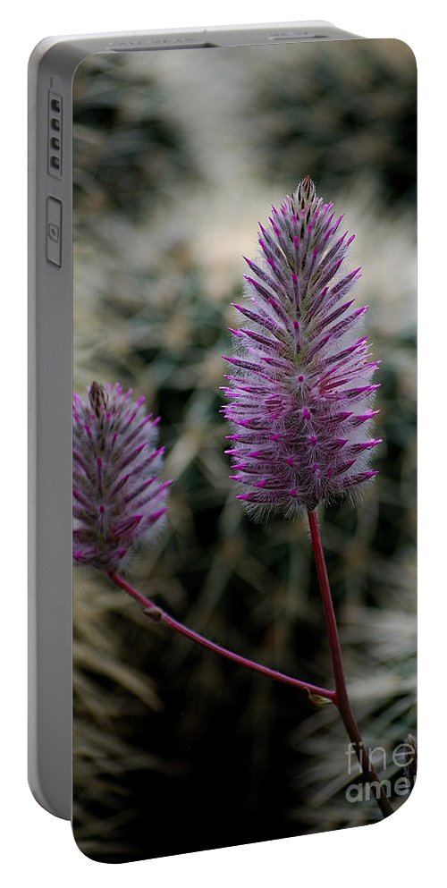 Flower Portable Battery Charger featuring the photograph Beauty Among Thorns by Sharon Elliott