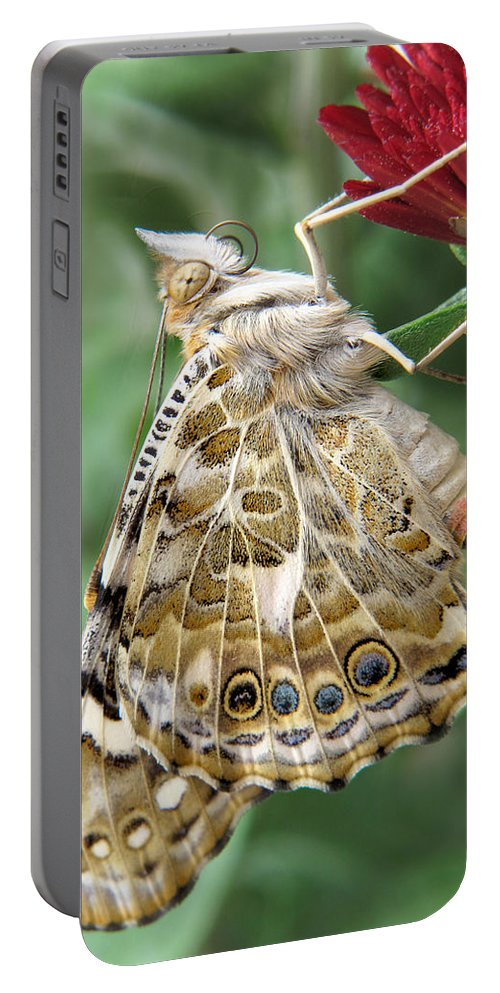 Butterfly Portable Battery Charger featuring the photograph Beauty In Butterflies by David and Carol Kelly