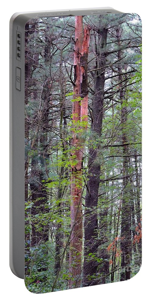 Tree Portable Battery Charger featuring the photograph Beauty In Nature 2 by Anne Clark