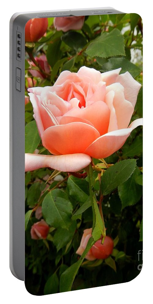 Floral Portable Battery Charger featuring the photograph Beauty In Pink by Loreta Mickiene