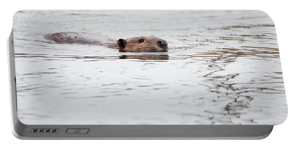 Beaver Portable Battery Charger featuring the photograph Beaver by Dale Kincaid