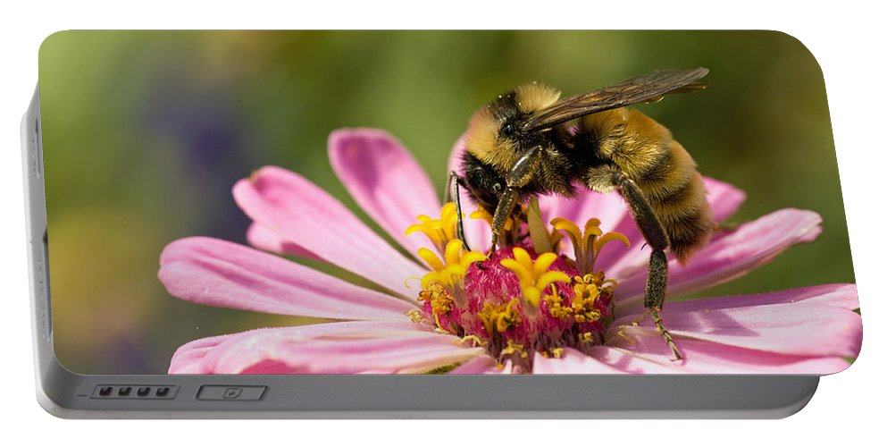 Bee Portable Battery Charger featuring the photograph Bee At Work by Greg Graham
