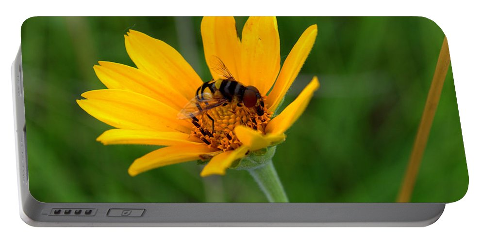 Smooth Oxeye Portable Battery Charger featuring the photograph Bee On A Smooth Oxeye by Mark Hudon