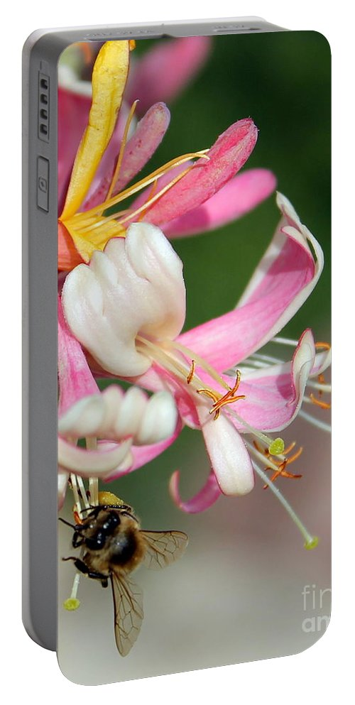 Honeysuckle Portable Battery Charger featuring the photograph Bee On Pink Honeysuckle by Renee Croushore