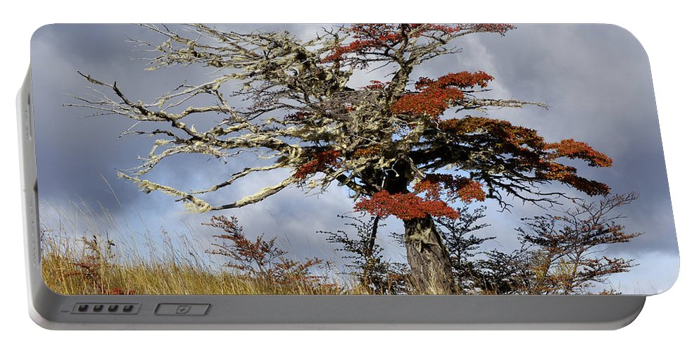 Nothofagus Portable Battery Charger featuring the photograph Beech Tree, Chile by John Shaw
