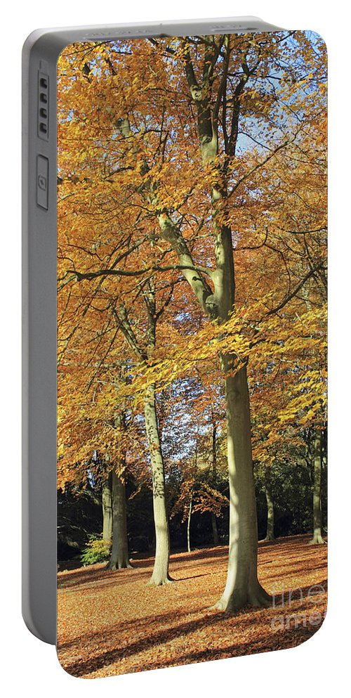 Britain British English Landscape Countryside Uk United Kingdom Beech Trees Fall Golden Autumn Autumnal Orange Gold Leaves Leaf Tranquil Calm Virginia Water Surrey Sunny Sunshine Portable Battery Charger featuring the photograph Beech Trees by Julia Gavin
