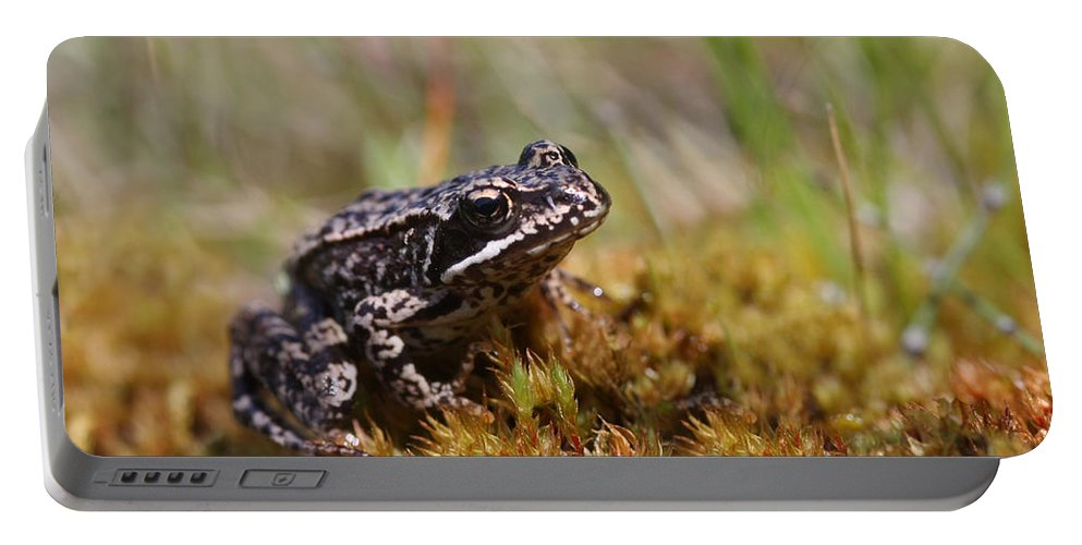 Cute Portable Battery Charger featuring the photograph Beutiful Frog On The Moss by Dreamland Media