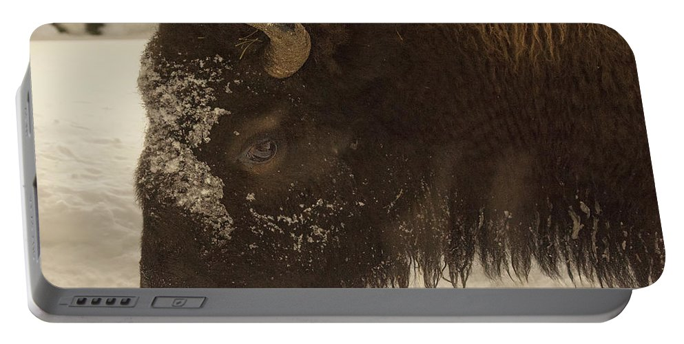 Beware Of The Bison Portable Battery Charger featuring the photograph Beware Of The Bison by Priscilla Burgers