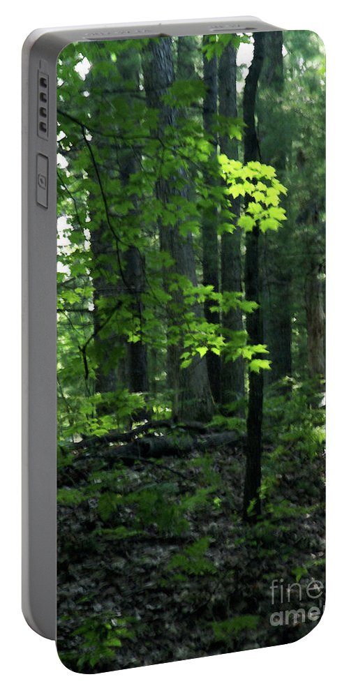 Forest Portable Battery Charger featuring the photograph Beyond The Trees by Linda Shafer