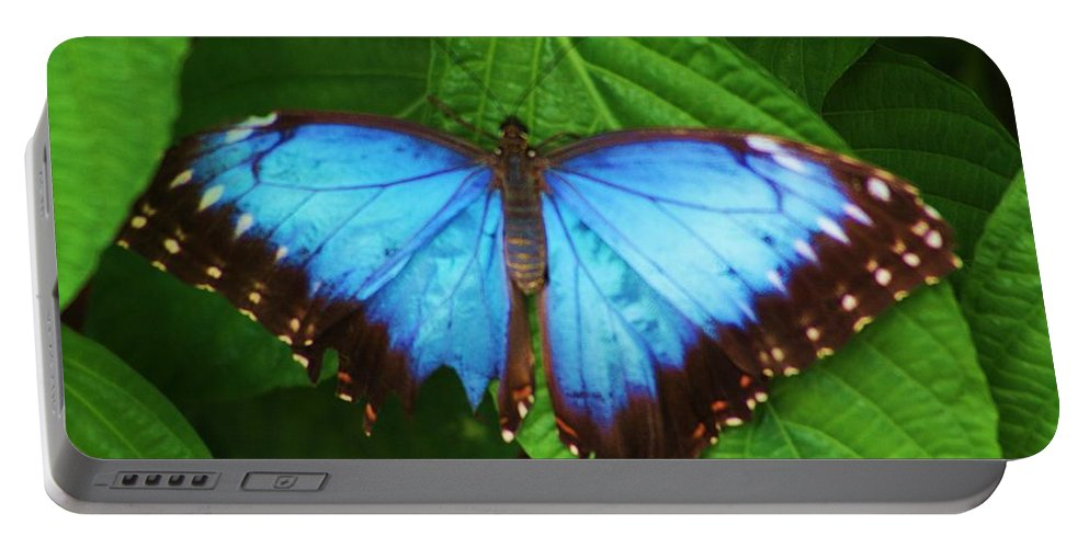 Blue Portable Battery Charger featuring the photograph Big Blue by Chuck Hicks