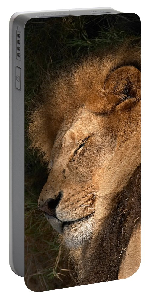 Lion Portable Battery Charger featuring the photograph Big Cat Nap by Randall Ingalls