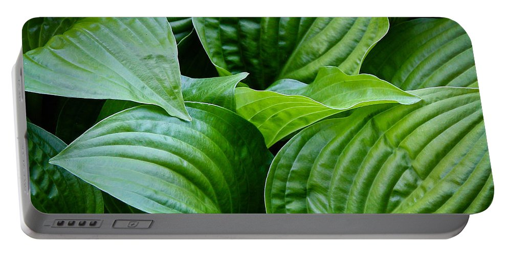 Leaves Portable Battery Charger featuring the photograph Tropical Green Leaves by Athena Mckinzie
