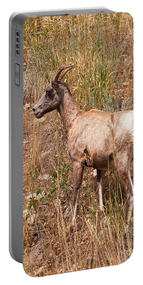 Sheep Portable Battery Charger featuring the photograph Big Horn Sheep Ewe by Timothy Flanigan and Debbie Flanigan Nature Exposure