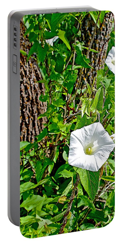 Bindweed In Pipestone National Monument Portable Battery Charger featuring the photograph Bindweed In Pipestone National Monument-minnesota by Ruth Hager