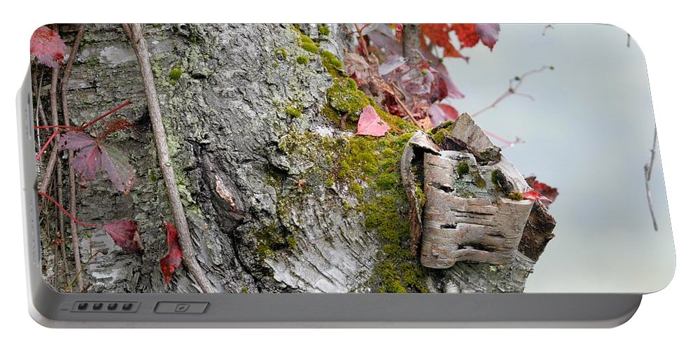White Birch Portable Battery Charger featuring the photograph Birch Study by Thomas Phillips