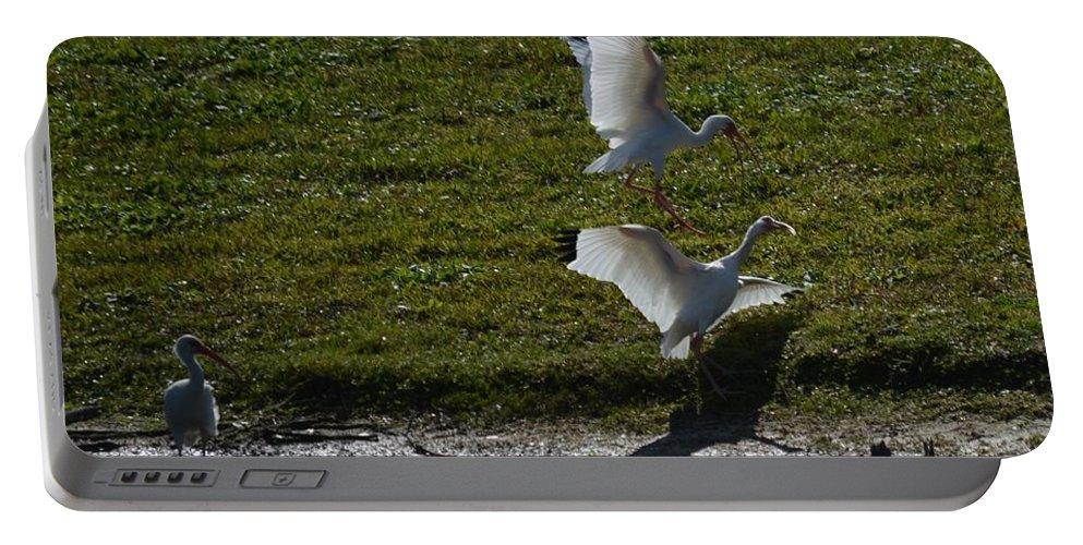 Bird Portable Battery Charger featuring the photograph Bird Fight by Linda Kerkau