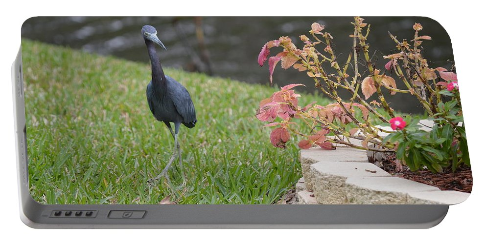 Florida Portable Battery Charger featuring the photograph Bird In Yard by Linda Kerkau