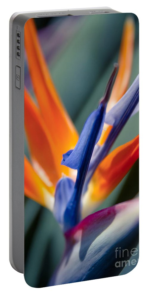 Bird Of Paradise Portable Battery Charger featuring the photograph Bird Of Paradise - Strelitzia Reginae by Sharon Mau
