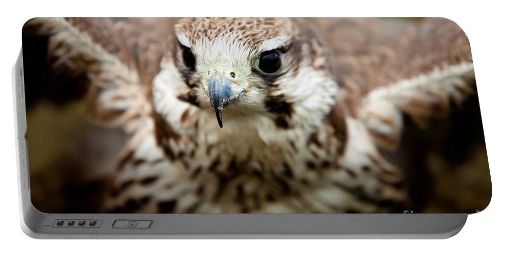 Bird Portable Battery Charger featuring the photograph Bird Of Prey Flying by Simon Bratt Photography LRPS