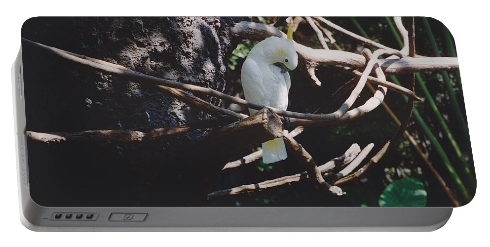 Nature Portable Battery Charger featuring the photograph Birdie Sitting In The Tree by Michelle Powell