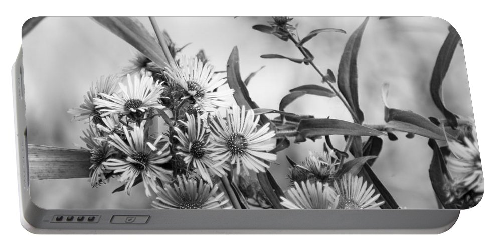 Optical Playground By Mp Ray Portable Battery Charger featuring the photograph Black And White Asters by Optical Playground By MP Ray