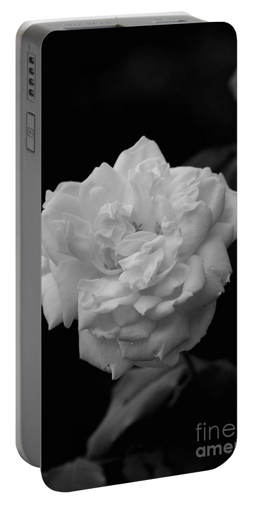 Reid Callaway Flower Portable Battery Charger featuring the photograph Black And White Rose by Reid Callaway