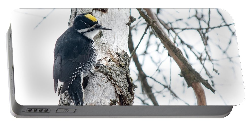 Black-backed Woodpecker Portable Battery Charger featuring the photograph Black-backed Woodpecker by Cheryl Baxter