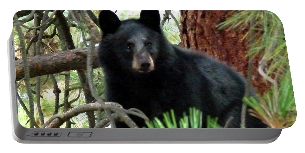 Black Bear Portable Battery Charger featuring the photograph Black Bear 1 by Will Borden
