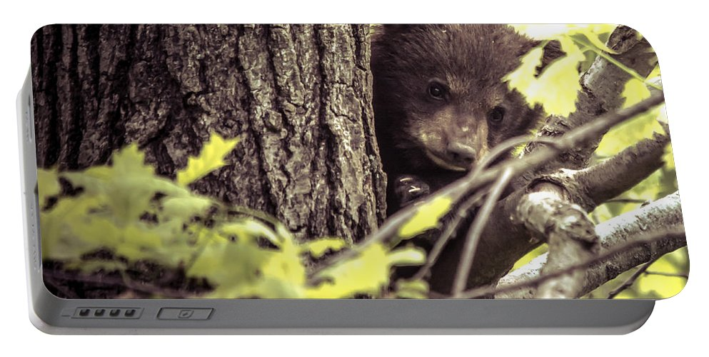 Black Bear Portable Battery Charger featuring the photograph Black Bear Cub by Cheryl Baxter
