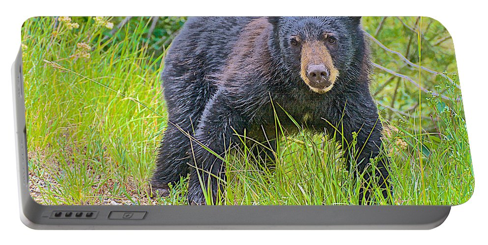 Black Bear Cub Near Road In Grand Teton National Park Portable Battery Charger featuring the photograph Black Bear Cub Near Road In Grand Teton National Park-wyoming by Ruth Hager