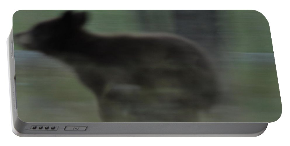 Black Bear Portable Battery Charger featuring the photograph Black Bear Cub Running by Frank Madia