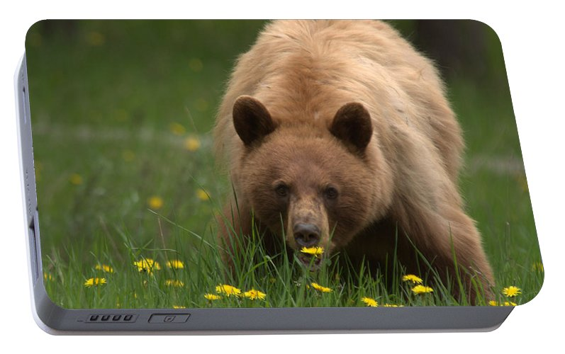 Bear Portable Battery Charger featuring the photograph Black Bear by Frank Madia