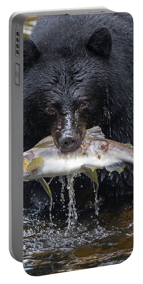 Black Bear Portable Battery Charger featuring the photograph Black Bear With Salmon by Max Waugh