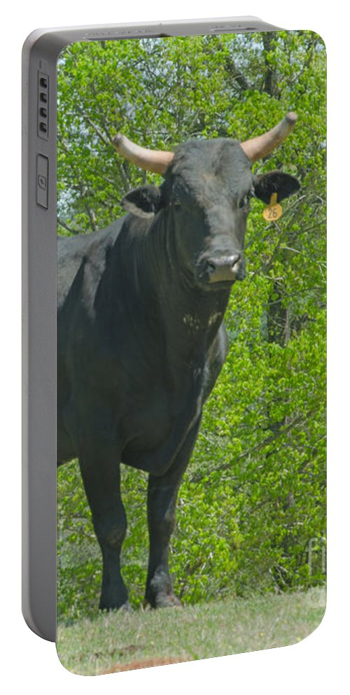 Animal Portable Battery Charger featuring the photograph Black Bull by Donna Brown
