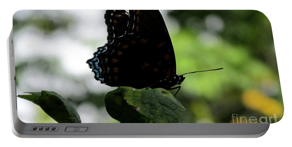 Black Butterfly Dark Butterfly Portable Battery Charger featuring the photograph Black Butterfly by Joshua Bales