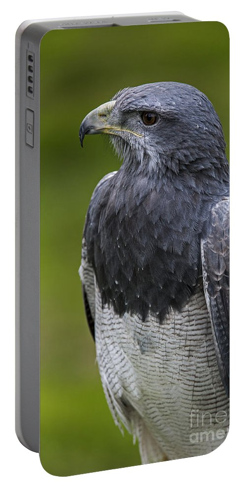Close-up Portable Battery Charger featuring the photograph Black-chested Buzzard-eagle by Arterra Picture Library