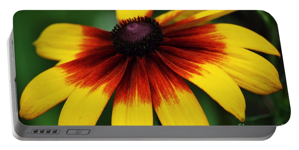 Black Eye Portable Battery Charger featuring the photograph Black Eyed Susan 2 by Kevin Fortier