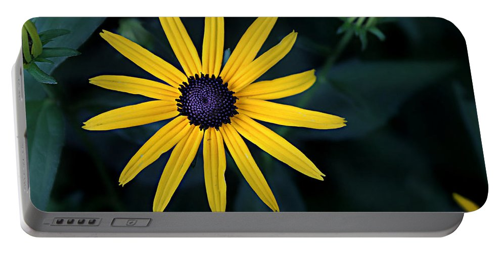 Asteraceae Portable Battery Charger featuring the photograph Black-eyed Susan by William Tanneberger