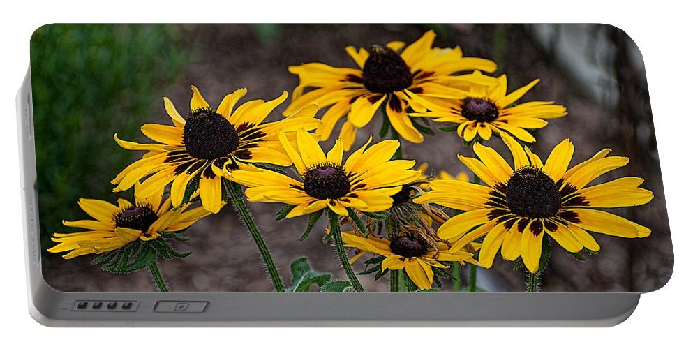 Black Portable Battery Charger featuring the photograph Black Eyed Susans by Photos By Cassandra