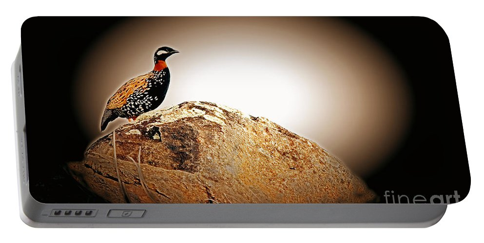 Black Francolin Portable Battery Charger featuring the photograph Black Francolin by Jim Cazel