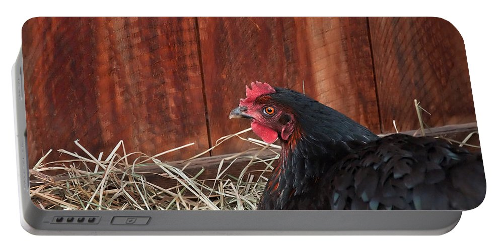 Chicken Portable Battery Charger featuring the photograph Black Laying Hen On Nest Art Prints by Valerie Garner
